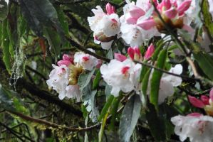 Mountain Blossoms by ESCanime