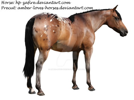 Appaloosa Precut by Amber-Loves-Horses