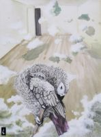 Grey Parrot by shelaghcully
