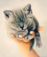 Kitten in Hand by Meorow