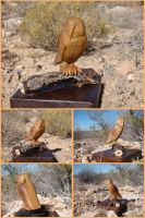Walnut Barn Owl by xofox