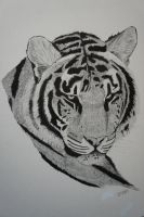 Tiger - Pen + Ink by 6re9