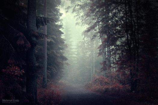 Lost in forest 06.15 by m-eralp