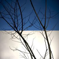 wall, sky and branches by m-lucia