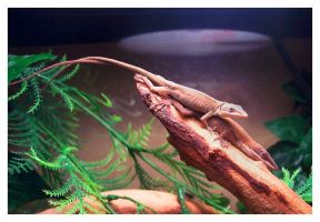 green anoles by an6el-of-death