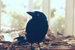 Flapper by apparate