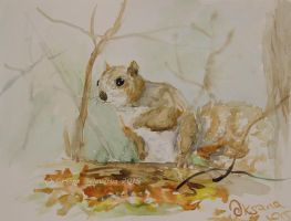Cute Squirrel - watercolor by Oksana007