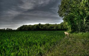 Woodloand HDR by JimPMM