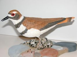 Killdeer 2 by Bagheera3