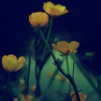 sweet buttercups by LeaHenning