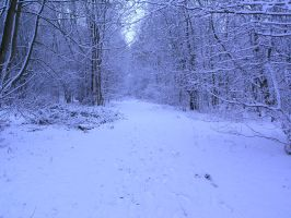 snowy fields -forests- 61 by dark-dragon-stock