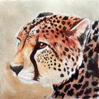 Lonely Cheetah by mJackson