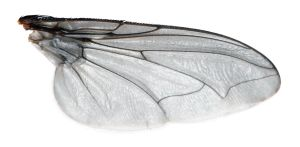 Fly Wing by evilneil