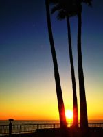 Palm Tree Sunset by KaleleAloha