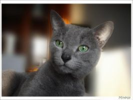 Ibosh the cat by minetje