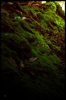 Forest Moss by RobertRobledo
