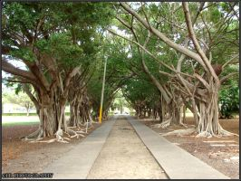 Enchanted forest? by Genteel