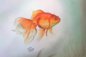 golden fish by subhy