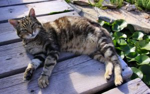 Half a Twin Kitty by Caloxort