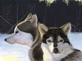 Huskies by SatuL