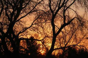 Sunrise in the Trees by TearsofEndearment