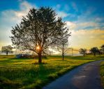 View of an Early Riser by Aenea-Jones