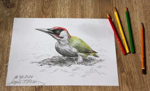 Green woodpecker 3D by lapis-lazuri