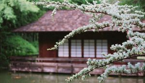 Japanese Tea House by dazulu1104