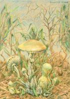 Pale mushrooms by AldemButcher