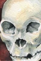 Skull ACEO by AshleighPopplewell