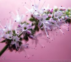 Mint Flowers by Seralunai