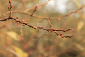 Beautiful Tree Branch... by jay4everuk