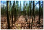 forest plantation area II by Tjabula