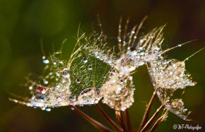 natural spectacles 7 by MT-Photografien