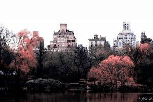 infrared central park 2 by Yair-Leibovich