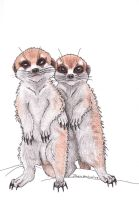 Meerkat Pups by Ominous-Impression