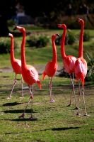 Flamingos by MrBlueSky1987