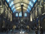 British Museum of Ntural History- the Hintze Hall by Freak-Angel56