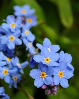 Spring Blue 2 by Forestina-Fotos