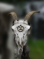 Fantasy Skull 1 by Dragoroth-stock