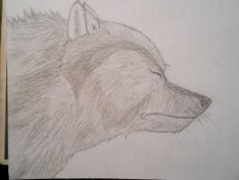 Somewhat better Wolf Head Sketch by BaltoTheShadowHusky