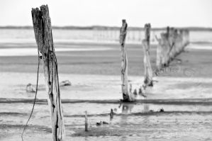 Coorong Piles I by FuriousEnnui