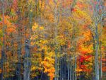 Shades of Autumn 2014.VI by MadGardens