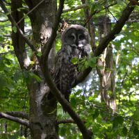 tawny owl by mimose-stock