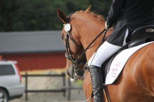 Dressage 8 by Chance-STOCK