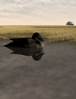 Duck On Water by Zethara