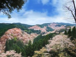Sakura -Mt.Yoshino- by SheltieWolf
