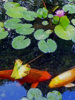Hawaiian Koi Pond by joeyartist