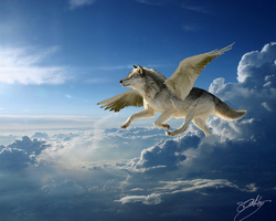 Photoshopped Wolf Flying c: by MidnightShadow88