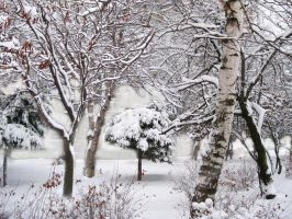 Winter by alicephotography8